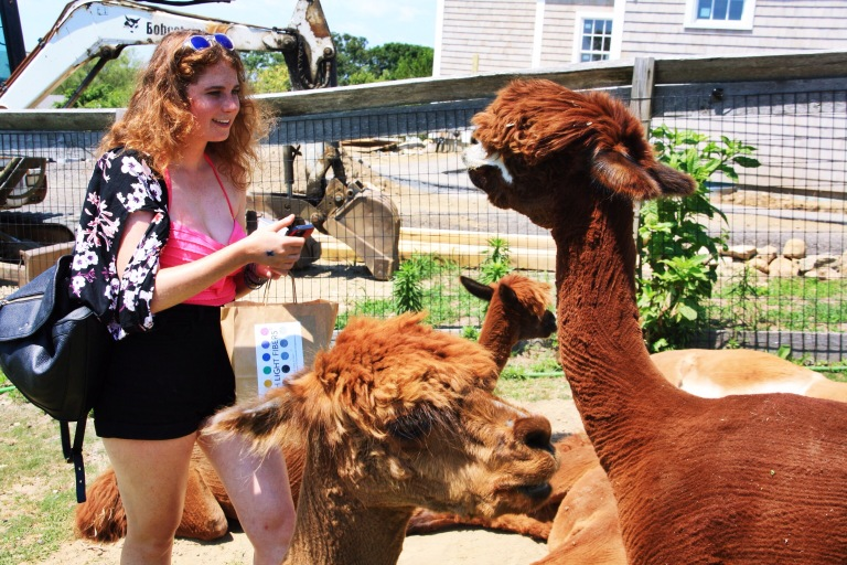 hanna meets the alpacas